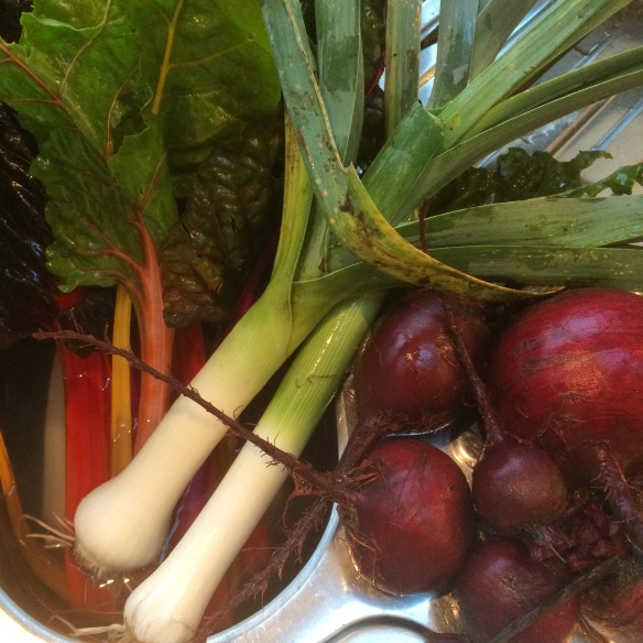 colourful harvest leeks chard beetroot